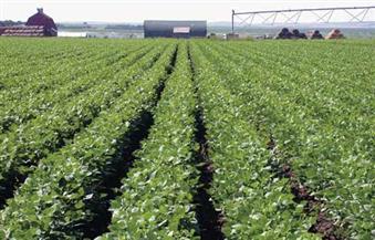 زراعة 229 ألفًا و809 أفدنة من المحاصيل الشتوية في المنوفية