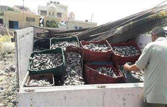 شرطة المسطحات بكفرالشيخ تضبط 120 ألف وحدة أسماك زريعة صغيرة قبل تهريبها للمزارع السمكية