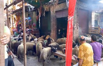 قبل ساعات من عيد الأضحى بأيام.. أسعار الأضاحي واللحوم تشتعل بالإسكندرية.. ومواطنون:  ارتفاعها أضاع بهجة العيد
