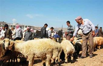 صعوبة ذبح الأضاحي في سوريا لضيق ذات اليد في ظل الحرب وشعب لا يشعر بفرحة العيد