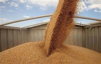 المصيلحي: تسويق القطاع الخاص للقمح خطر ولدينا سعات تخزينية تزيد عن 4 ملايين طن