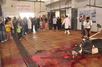 محافظ الوادي الجديد يشهد ذبح أضاحي العيد المخصصة للحالات الأكثر احتياجًا