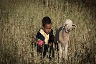 15 فيلمًا من 15 دولة في المسابقة الرسمية لدول المتوسط بمهرجان الإسكندرية