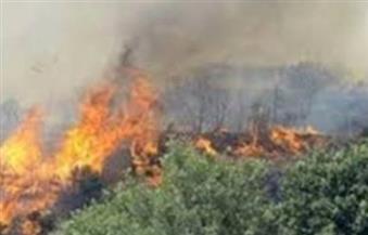 السيطرة على حريق بمزرعة موالح بجزيرة شندويل في سوهاج