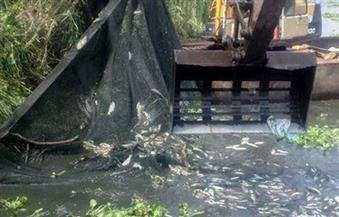 حملة إزالات للأقفاص السمكية بفرع رشيد في محافظات الغربية والبحيرة وكفر الشيخ