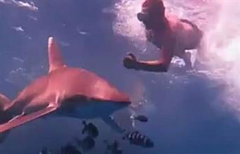 """مدير المحميات بجنوب سيناء بعد تعرض فتاة لهجوم من سمكة القرش: """"الإنسان ليس في قائمة طعامها"""""""