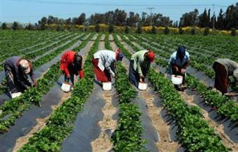 """زراعة سوهاج تنظم ندوة بعنوان """"التخطيط الاستراتيجى لتسويق المحاصيل الزراعية"""""""