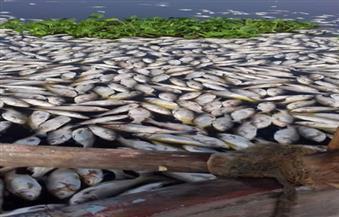 بالصور.. أهالي الغربية: نفوق الأسماك في فرع النيل بسبب المخلفات وارتفاع نسبة الأمونيا