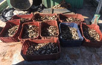 بالصور.. ضبط 150 حالة صيد مخالف في حملة على بحيرة البرلس