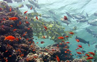 """""""البيئة"""" تشارك بمعرض للحياة البحرية والبرية بالبحر الأحمر"""