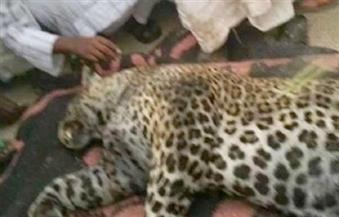 حبس صاحب مزرعة الحيوانات المفترسة بالعياط عامين بعد مقتل طفلة