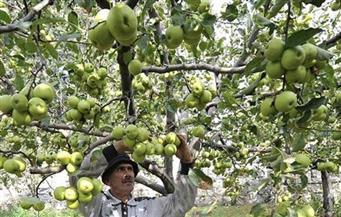 """""""التفاح"""" مقابل """"البطاطس"""".. استمرار التعاون الزراعي بين مصر ولبنان"""