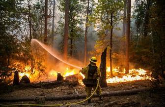 حرائق الغابات تدمر 5 مبانٍ في أستراليا