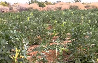 """""""زراعة الفيوم"""" تحتفل بيوم حصاد تحميل فول الصويا على الذرة الشامية في حقول إرشادية"""