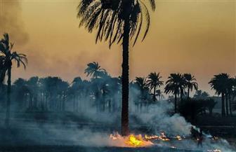 """""""مستقبل وطن"""" يطالب بالحد من ظاهرة حرق مخلفات الذرة بأسيوط"""