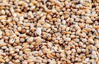 تأجيل دعوى وقف استيراد القمح المصاب بالإرجوت لـ 14 نوفمبر المقبل