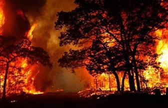 ارتفاع عدد قتلى حرائق الغابات في كاليفورنيا إلى 43 قتيلًا