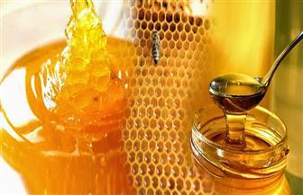 دراسة: 75٪ من عسل النحل في العالم به مبيد حشري