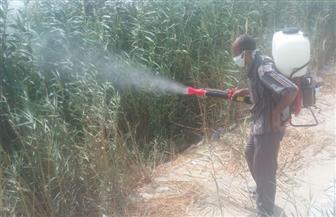 الزراعة: حملات لمواجهة انتشار البعوض المسبب لحمى الدنج بالغردقة | صور