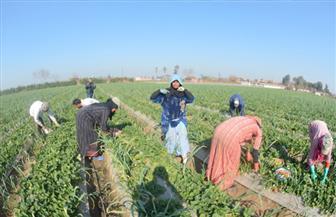 """ننشر الصيغة النهائية لمشروع قانون نقابة """"الفلاحين والمنتجين الزراعيين"""""""