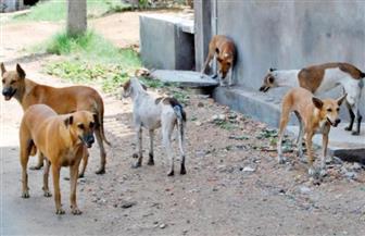 كلب ضال يعقر 4 مواطنين بقرية المنطاوي بكفرالشيخ