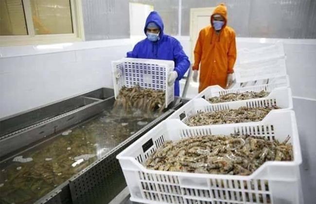 غرفة الصناعات الغذائية: 500 مليون دولار تضع مصر في قائمة دول صناعة الأسماك عالميا -