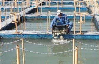 """""""الزراعة"""": الاعتماد الدولي لمعامل الأسماك بمشروع بركة غليون"""