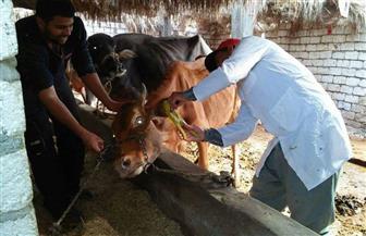"""""""البيطريين"""" تشكل وفدا لمقابلة وزير الزراعة لبحث مشاكل العاملين بالثروة الحيوانية"""