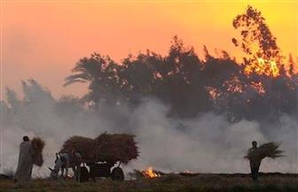 مجلس الوزراء يستعرض جهود البيئة في التعامل مع تلوث الهواء نتيجة حرق قش الأرز