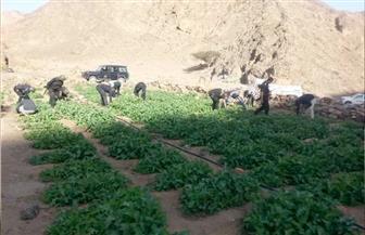 إزالة 814 فدان نباتات مخدرة وضبط 310 ملايين جنيه في قضايا تهرب ضريبى وجمركى خلال 4 أعوام