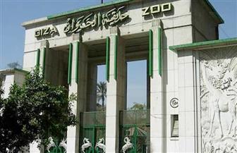 وزارة الزراعة تنفي نقل حديقة الحيوان من الجيزة