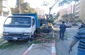 """""""المصري الديمقراطي الاجتماعي"""" بأسوان يشارك في تجميل الشوارع"""