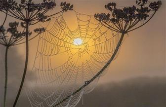 تجربة جديدة لاستخدام خيوط العنكبوت في صناعة الميكروفونات والهواتف المحمولة