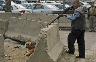 """رئيس حى المعادى: إبادة 16 كلبًا وندرس تدريب """"الضال"""" على أعمال الصيد والحراسة"""