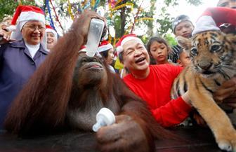 كيف يحتفل إنسان الغاب بالكريسماس مع صاحب حديقة في الفلبين؟| صور