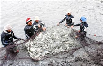 """يفتتحها الرئيس السيسي.. المزارع السمكية لـ""""قناة السويس"""" طريق نحو تحقيق الاكتفاء الذاتي"""