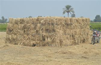 حملات توعية وتفتيش على محطات فرز الحاصلات الزراعية بالنوبارية