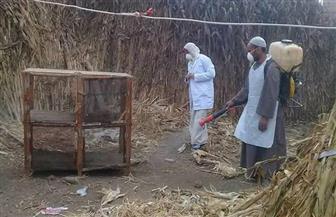 تخلص صحي من طيور نافقة ببؤرة لأنفلونزا الطيور بالشهداء في المنوفية| صور