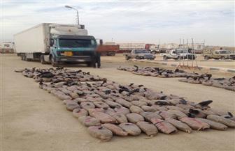 المتحدث العسكري: القضاء على 8 تكفيريين وتدمير مخابئ بوسط سيناء | صور