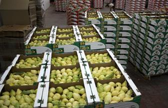 رفع الحظر البحريني على الجوافة المصرية الطازجة