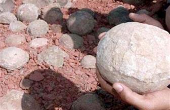 العثور على 20 بيضة ديناصور في الصين