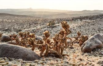 120 مليونا لتطوير محميات جنوب سيناء والغابة المتحجرة.. وافتتاح وادي دجلة بداية العام