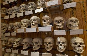 فرنسا تقرر إعادة جماجم المقاومين الجزائريين المتواجدة بمتحف الإنسان بباريس للجزائر
