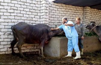 وزير الزراعة يتلقى تقريرا حول نتائج التفتيش البيطري في 4 محافظات.. ويشدد على تكثيف الرقابة للحد من المخالفات