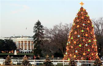 الفاتيكان يغرس شجرة ومهد عيد الميلاد في مراسم سنوية