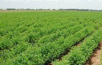 الزراعة: ارتفاع المساحات المنزرعة بالمحاصيل الشتوية لـ 4.8 مليون فدان