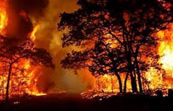 """إعلان حالة الطوارئ بمدينة """"كرايستشيرش"""" النيوزيلندية على خلفية حرائق الغابات"""