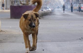 كلب ضال يعقر ربة منزل وابنها وابن شقيقها داخل منزلهم بالفيوم