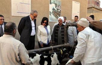 """""""محرز"""" في القليوبية: تحصين الماشية يصب في مصلحة المربي .. و""""العشماوي"""":  أجهزة المحافظة متكاتفة لإنجاح الحملات"""