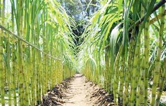 """رئيس مجلس المحاصيل السكرية يثير أزمة  في """"زراعة النواب"""""""